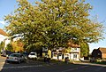 Oak in the centre of Brenchley - geograph.org.uk - 1025217.jpg