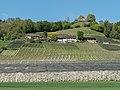 Obst- und Weinbau am Thurberg, Weinfelden.jpg