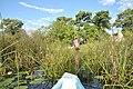 Okavango Delta - Botswana - panoramio.jpg