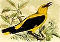 Onze vogels in huis en tuin (1869) (14771533353).jpg
