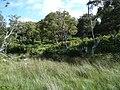 Open Birch Woodland - geograph.org.uk - 42430.jpg