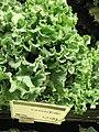 Organic green kale.jpg