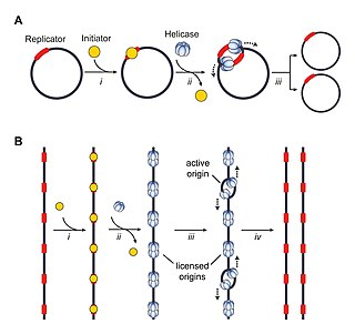 Origin of replication Sequence in a genome