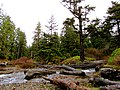 Oswald West State Park (8238615732).jpg