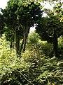 Overgrown garden - geograph.org.uk - 920193.jpg