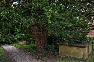 Seven Wonders of Wales - Image: Overton yew tree 2016 06 04
