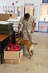 PMO trains military working dog to find narcotics 151019-M-TI310-036.jpg
