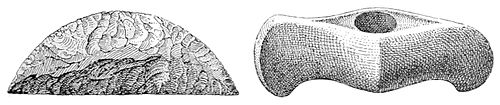 PSM V47 D025 Flint saw and stone axe.jpg