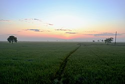 Paddy fields before sunrise.jpg