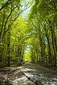 Parco-nazionale-del-gargano4.jpg
