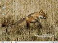 Pardus Linux.png