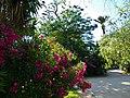 Parque Jardín de la Ciudadela, flores.jpg
