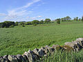 Pasture field - geograph.org.uk - 440896.jpg