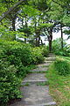 Path Bussey Hill Arnold Arboretum.jpg
