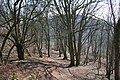 Path Through the Trees on Midsummer Hill - geograph.org.uk - 689731.jpg