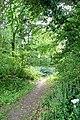 Path but no foxgloves - geograph.org.uk - 1344775.jpg