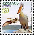 Pelecanus crispus 2007 Armenian stamp.jpg