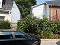 Percy street, 2013 08 21 (16).JPG