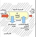 Perfusion - Arabic.jpg