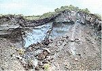 Permafrost - ice wedge.jpg