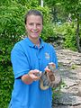 Person holds lake eir water snake nerodia sipedon insularum.jpg