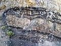 Phosphoria Formation (Permian; Astoria Hot Springs roadcut, Teton County, Wyoming, USA) 2 (49192197876).jpg