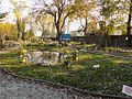 Piante acquatiche Parco Buzzaccarini.jpg
