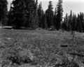 Picnic area with stoves and tables in meadow at Cedar Breaks National Monument campground. ; ZION Museum and Archives Image 7694 (51186cae22a04f668b20465990f2e540).tif