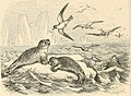 Picture fables (1858) (14565961139).jpg
