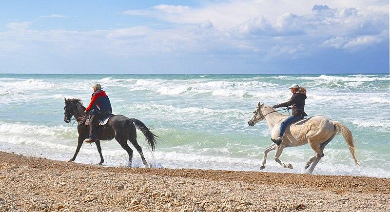 סוסים בחוף