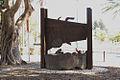 PikiWiki Israel 31953 Ding.jpg