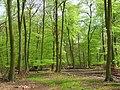 Pishillbury Wood, Maidensgrove - geograph.org.uk - 797905.jpg