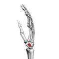 Pisiform bone (left hand) 03 ulnar view.png