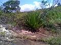 Plantas Nativas - panoramio.jpg