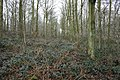 Plantation Lanes, Impenetrable Brambles - geograph.org.uk - 350080.jpg