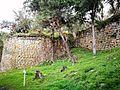 Plantes cobrint les ruïnes de Kuelap.jpg