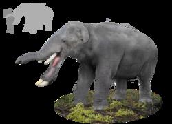 Platybelodon.png