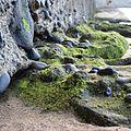 Playa de gran canaria.jpg