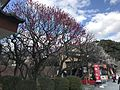 Plum trees in Dazaifu Temman Shrine 3.jpg