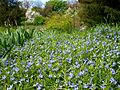 Poltava Botanical garden (100).jpg