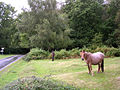 Ponies grazing in the rain, Bramble Hill, New Forest - geograph.org.uk - 59884.jpg
