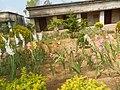 Primary school garden - Baragounian.jpg