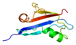 Protein RGL2 PDB 1rlf.png