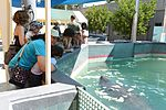 Puerto Rico Air National Guard visits the Puerto Rico Manatee Conservation Center 160319-Z-MB617-001.jpg