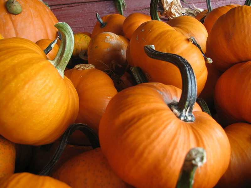 File:Pumpkins 1.JPG