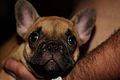 PuppyPumpa.jpg