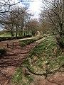 Quantock bridleway (2) - geograph.org.uk - 1278794.jpg