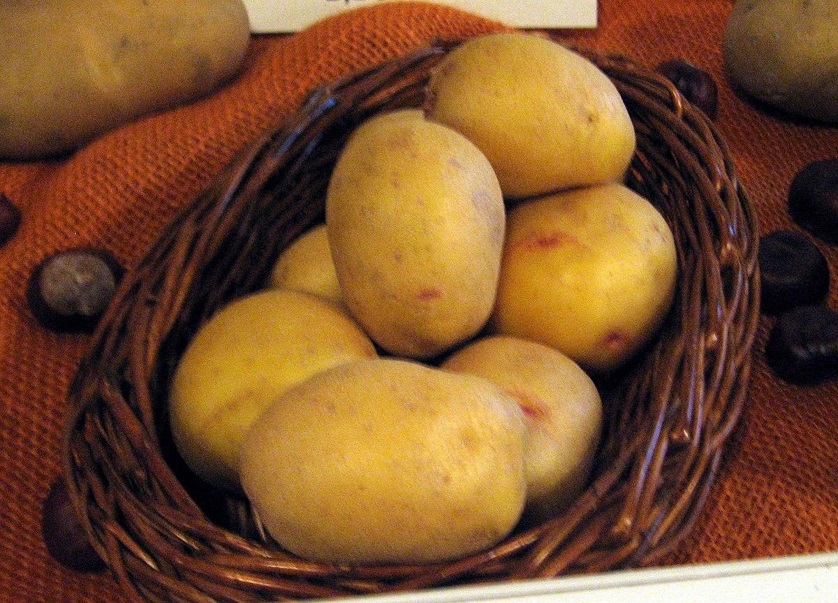 Quarta Kartoffel Wikipedia
