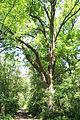 Radkersburg-Murufer 9104.JPG