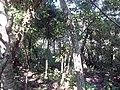 Redenção - State of Pará, Brazil - panoramio (12).jpg